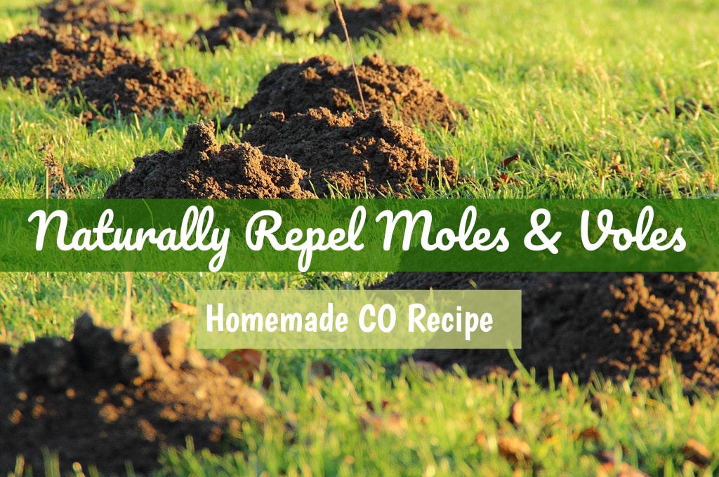 Homemade Castor Oil Vole & Mole Repellent | Castor Oil Guide